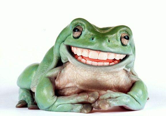I froggin' love this guy!