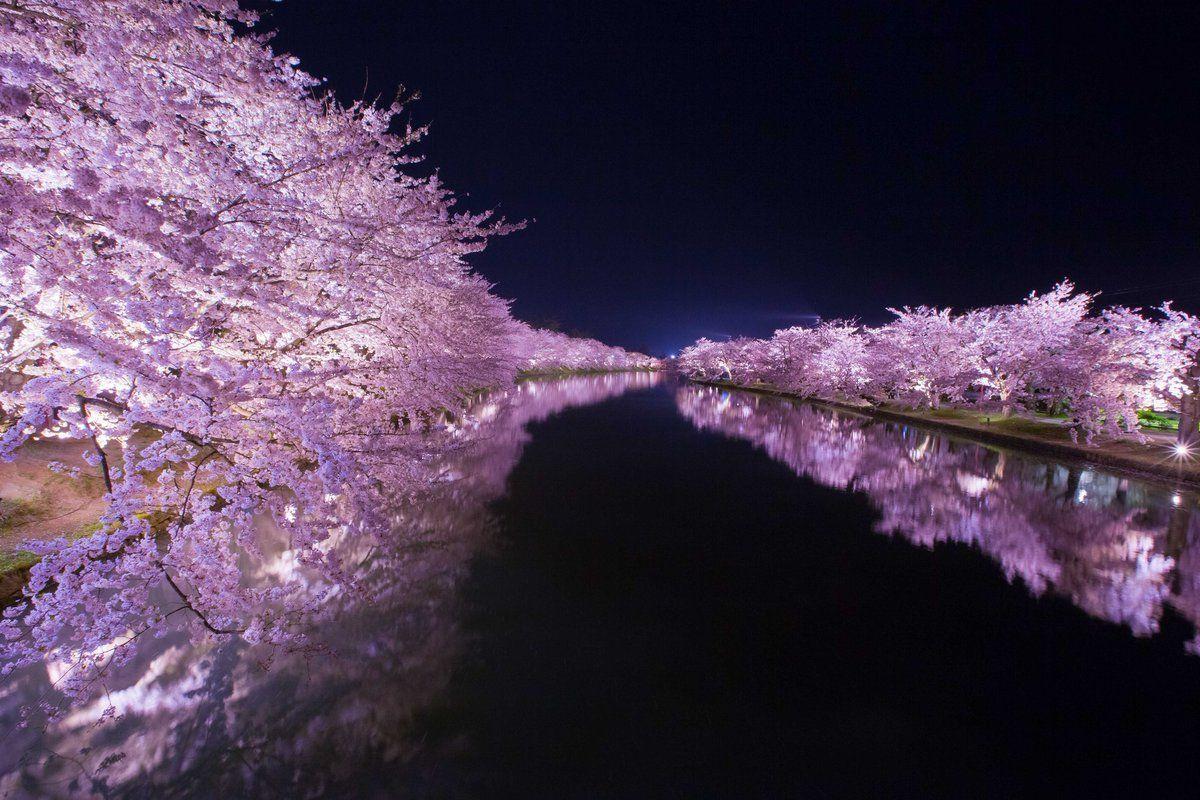 Travel Ganden Sumtseling Monastery The Beautiful Cherry Blossom Japan Japanese Cherry Blossom Cherry Blossom