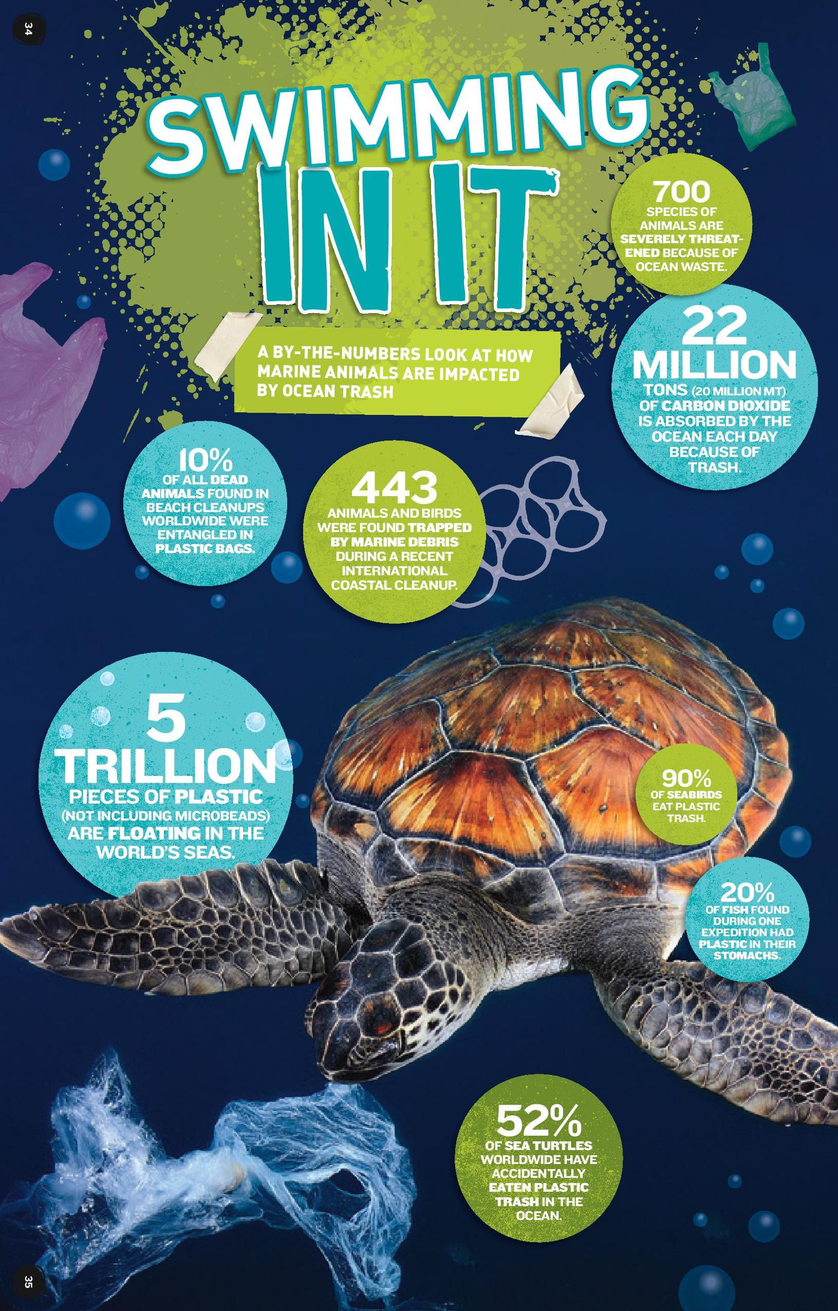 Ocean Plastic By The Numbers