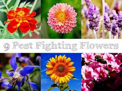 9 Pest Fighting Flowers | Health & Natural Living