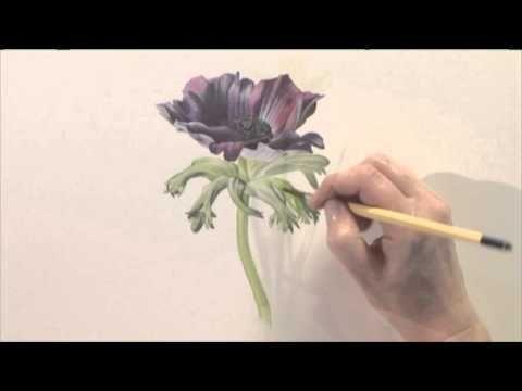 Billy Showell's Watercolour Flower Portraits (BSD1)