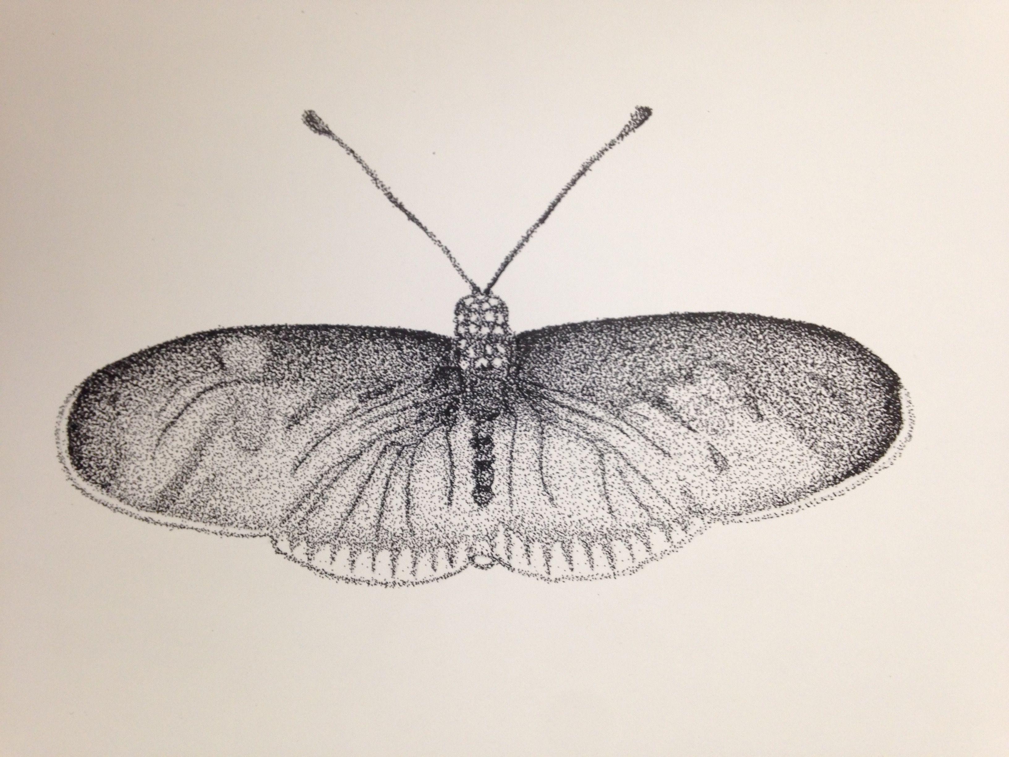 Mariposa, Diseño, Puntillismo, Blanco Y Negro, Insecto