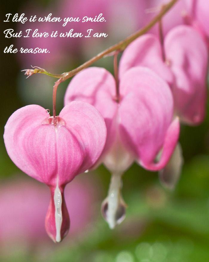 Smile Inspirational Quote Inspirational Smile Quotes Organic Gardening Bleeding Heart