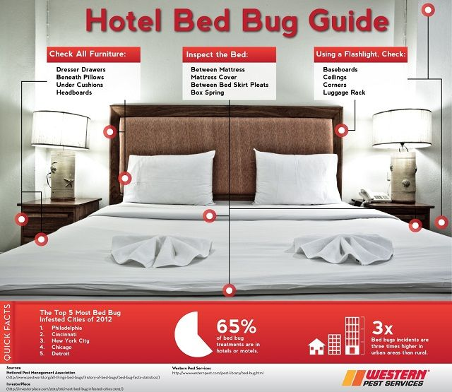 There Has Been A Surge In Pest And Bed Bug Related Lawsuits Insuted Against Hotels