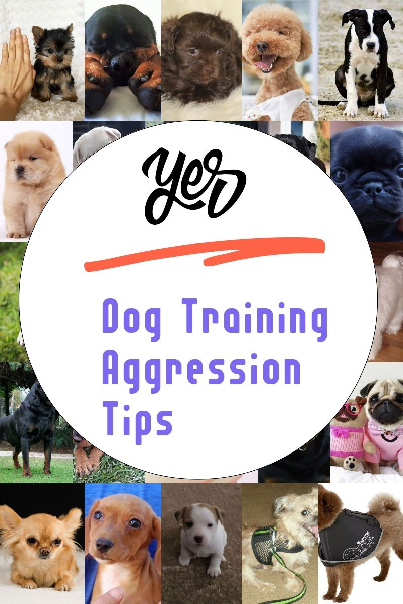 A Few Tricks To Help You On Dog Training Aggression Tips More