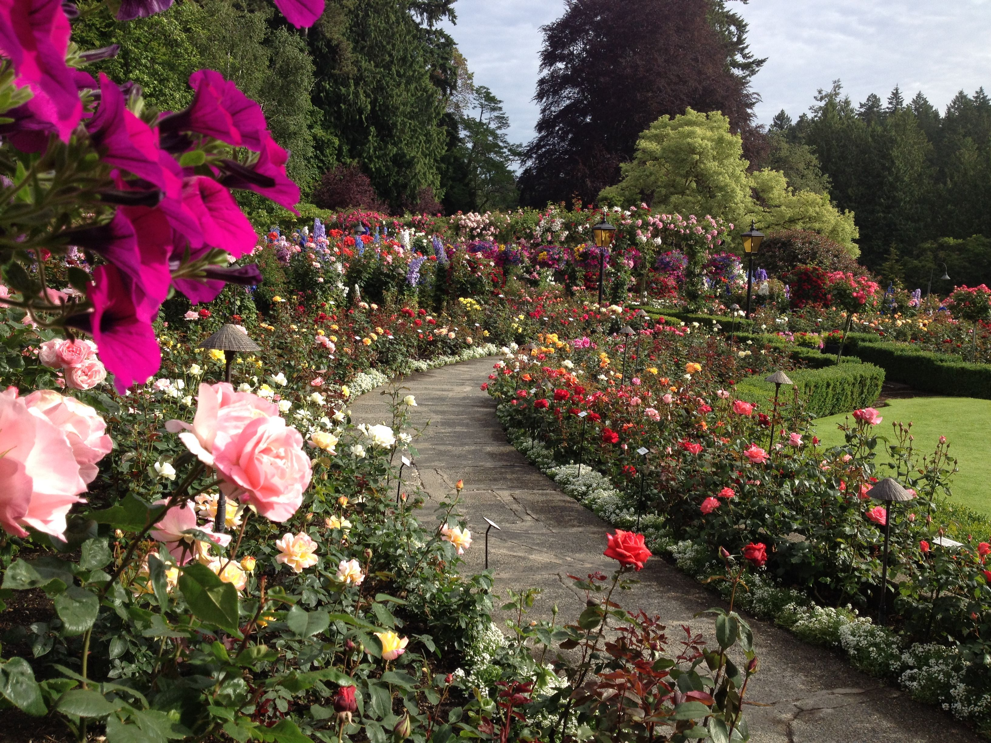 Curved walk in the Rose Garden. #butchartgardens #sum… | Roses are ...
