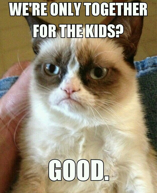 We Re Together For The Kids For Diana Funny Grumpy Cat Memes Funny Cat Memes Grumpy Cat Meme