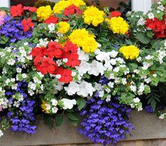 collection diane magnifique composition pour fleurir vos jardini res l 39 ombre pour fen tres. Black Bedroom Furniture Sets. Home Design Ideas