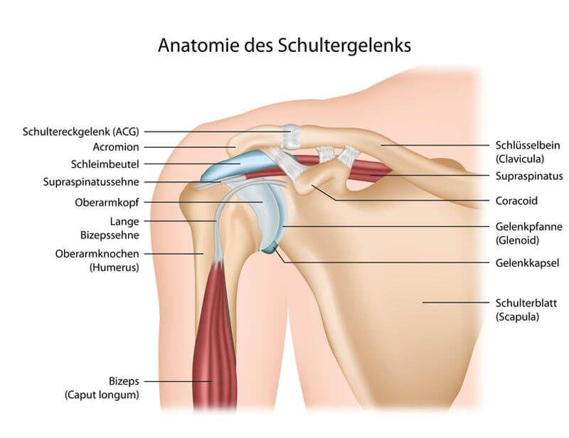 Yoga-Übungen Schultern und Nacken - Anatomie | Entspannung ...