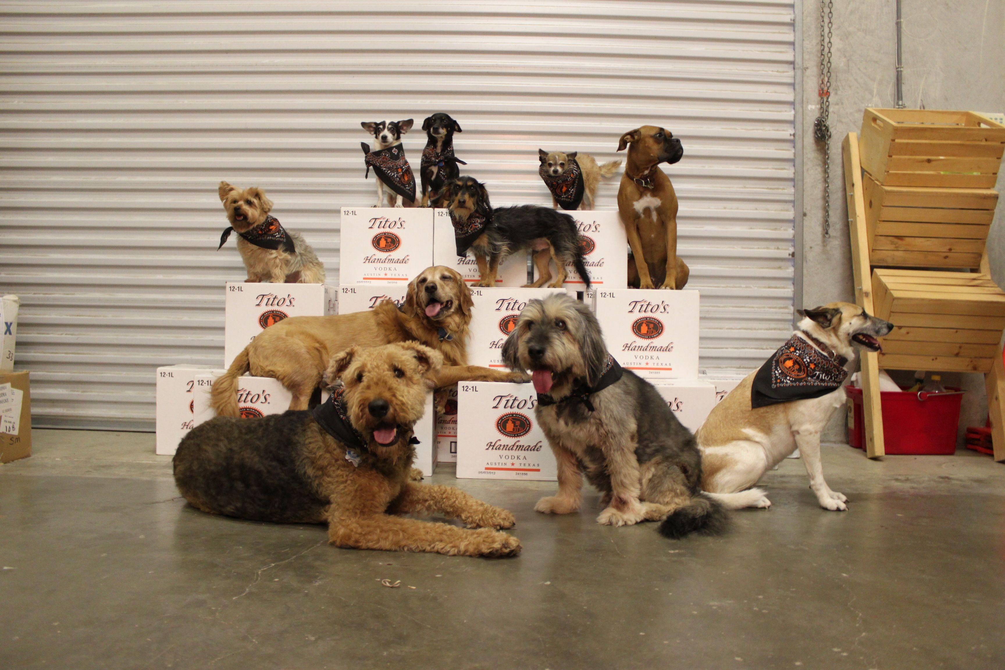 Happy Take Your Dog To Work Day! Here Are A Few Of The