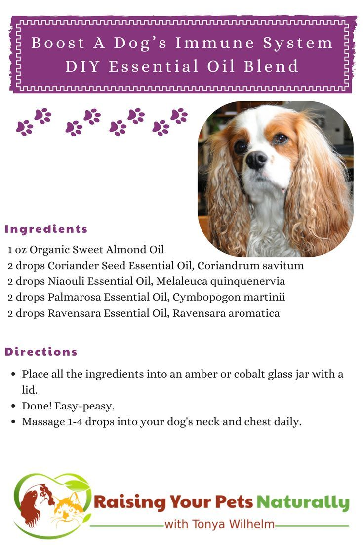 Immune Booster for Dogs Toxic foods for dogs, Niaouli
