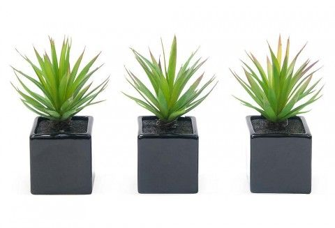 Small Aloe plants in black pots. These are the cutest artificial aloe plants ever!