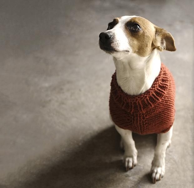 Top 5 Free Dog Sweater Knitting Patterns | Suéteres, Patrones y Blog