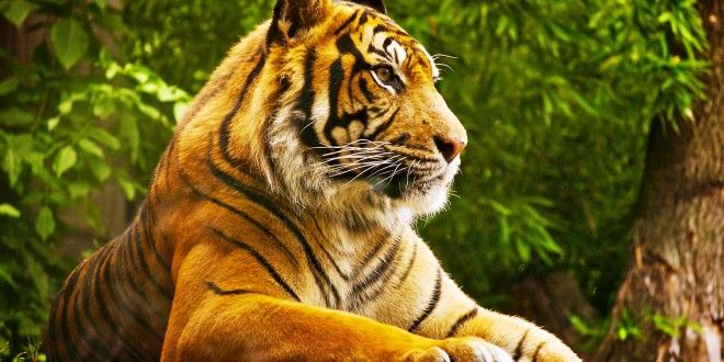 Mind Blowing Hd Downloads Tiger Wallpapers Dhd Wallpaper Abstract Wallpaper Art Painting Wallpaper