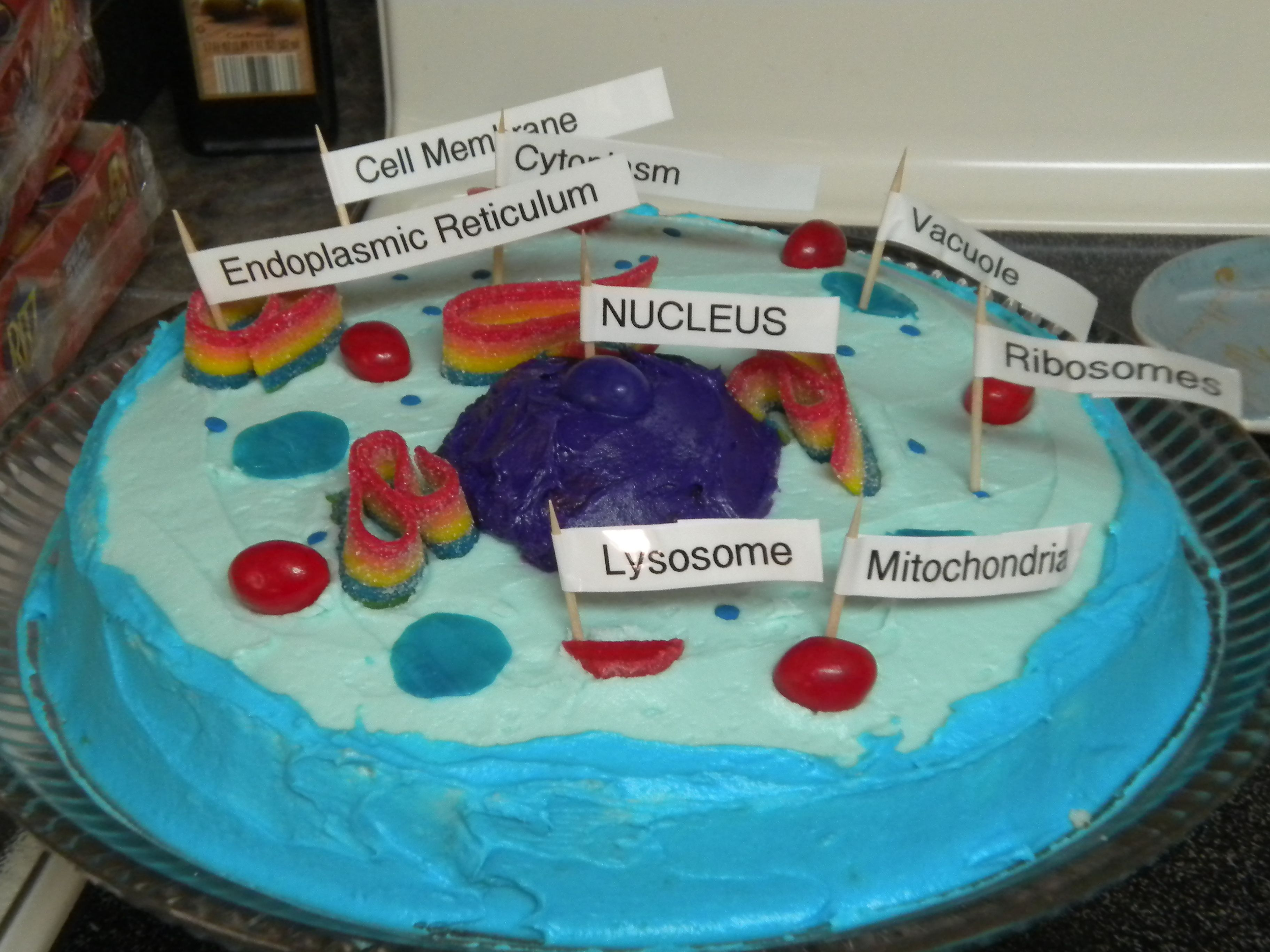 Edible Animal Cell Cake Cells Project