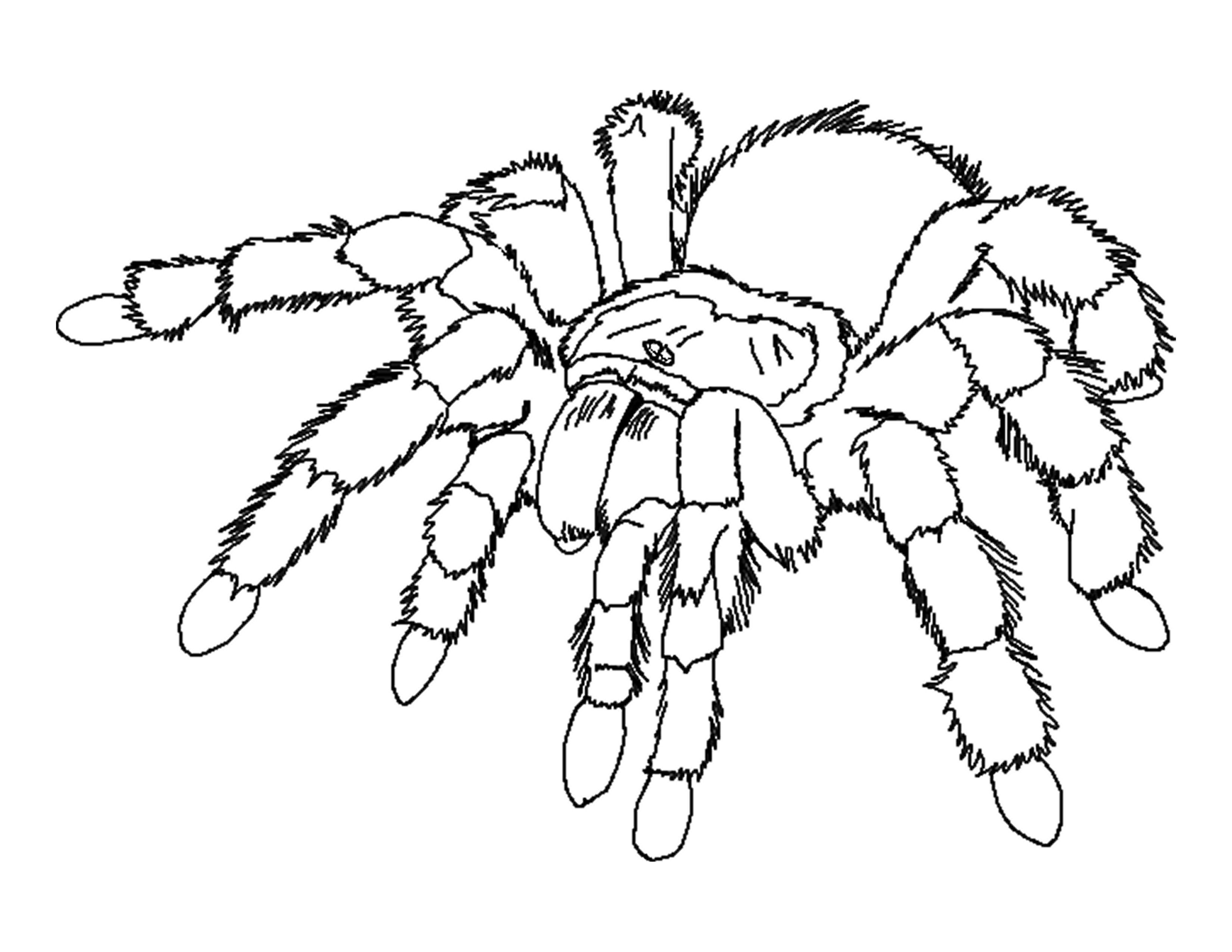 Spider Coloring Pages Spider Coloring Page Insect Coloring Pages Bug Coloring Pages