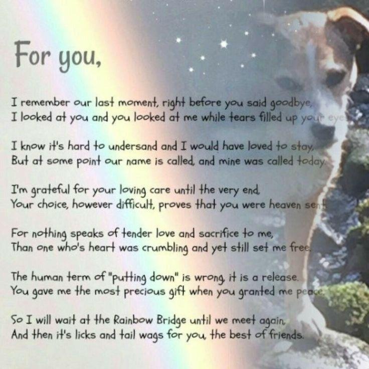 Pin by Jodi Bieler on Pawprints left on my heart Dog poems