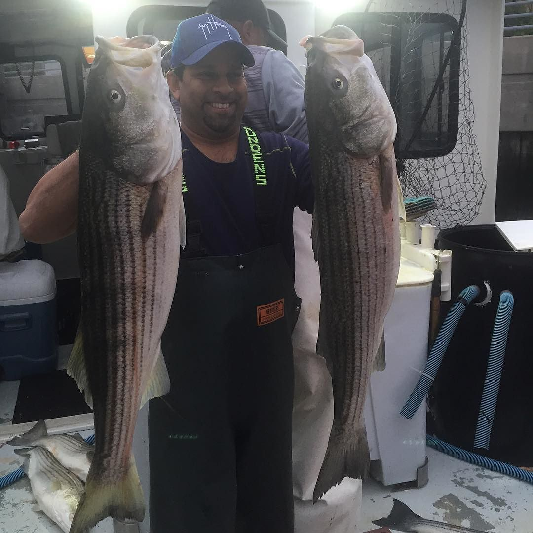 Pair of jumbo striped bass!!! #stripedbass #fishing #bass #charter #fishingboat #nyc #brooklyn #emmons #fishingrod #boat #ocean #marina #instalike #instadaily #rockfishcharters #fishingnyc #brooklynfishingclub #fishingtrip #fishinglife #fishingboat #fishingdaily #love #instagood #nycfishing