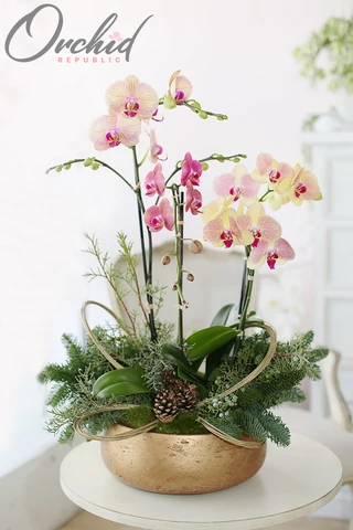 Order Christmas Flowers Orchids Online Same Day Delivery Orchidrepublic Orchid Flower Arrangements Christmas Flower Arrangements Orchid Arrangements