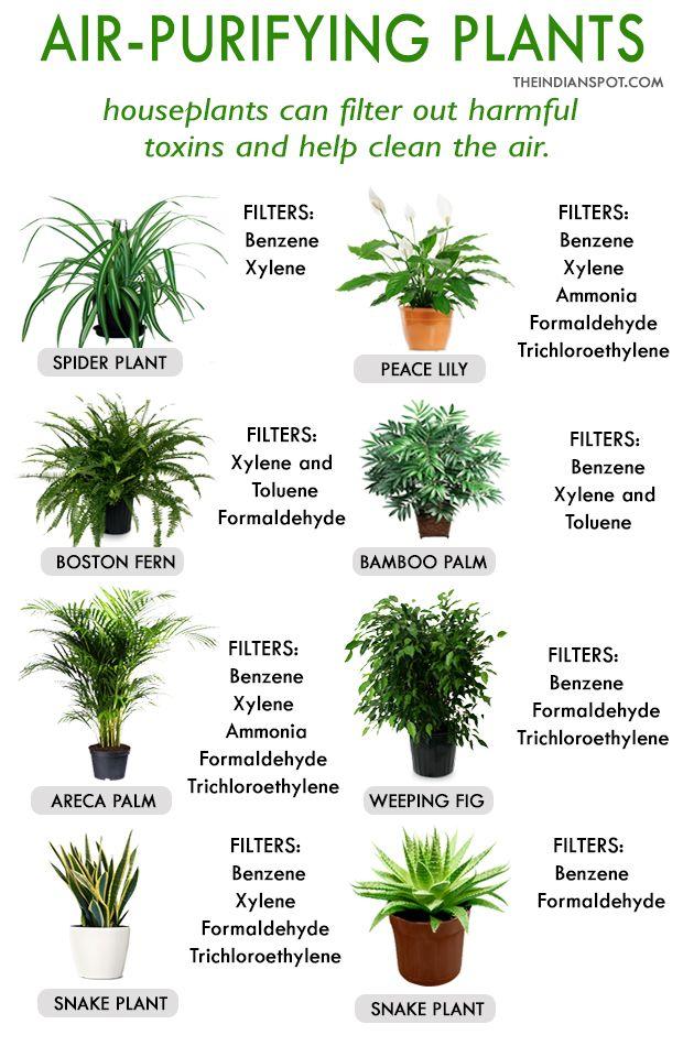 Indoor Plants Fresh Air