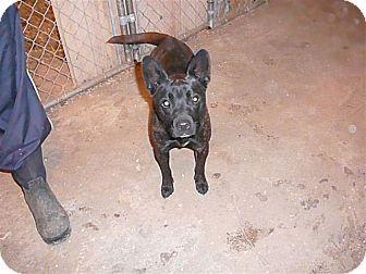 Pin By Lisa Barker On Lisa Barker French Bulldog For Adoption