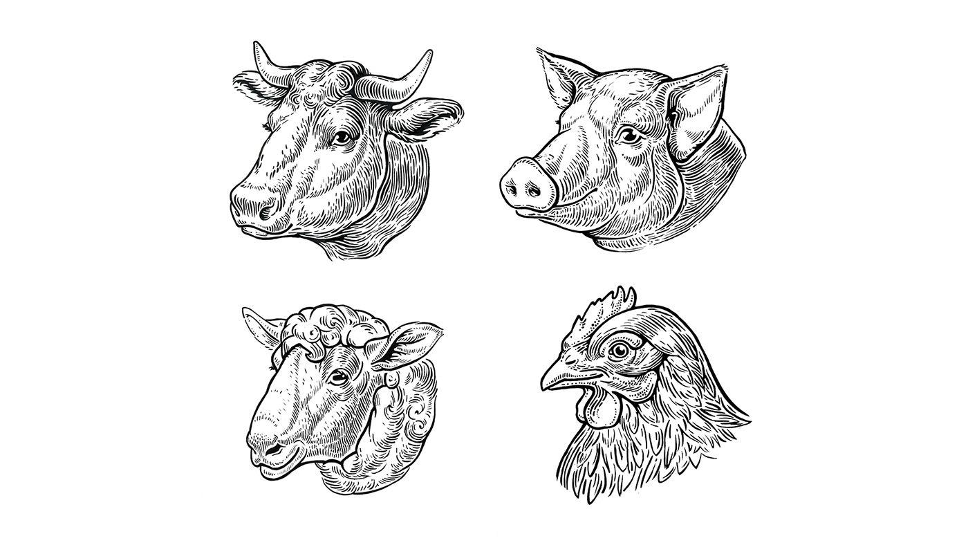 Рисунки из свинины