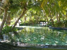 Explore Best Swimming Pools Tropical Pool And More