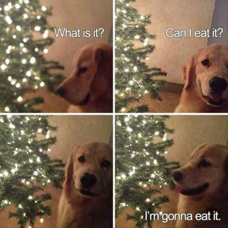 Dog Memes and Funny Humor Pictures videos