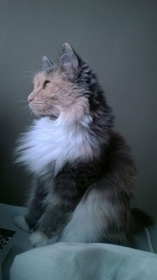 Pin By Samantha Luther On Kitty Cat Beautiful Cats Cats Pretty Cats