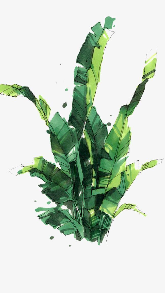 Hand Painted Banana Leaves Leaf Green Hand Painted Png Image Risunki Pejzazhej Sadovye Illyustracii Eskizy Derevev