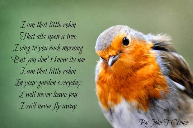 Pin By Christine Sechler On Birds Robin Birds Quotes