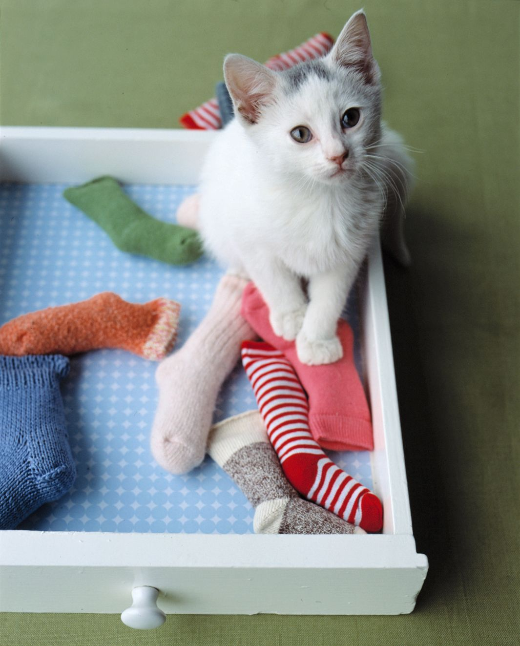 10 Diy Cat Toys And Games That You Can Make At Home Cat Toys Diy Cat Toys Cat Diy
