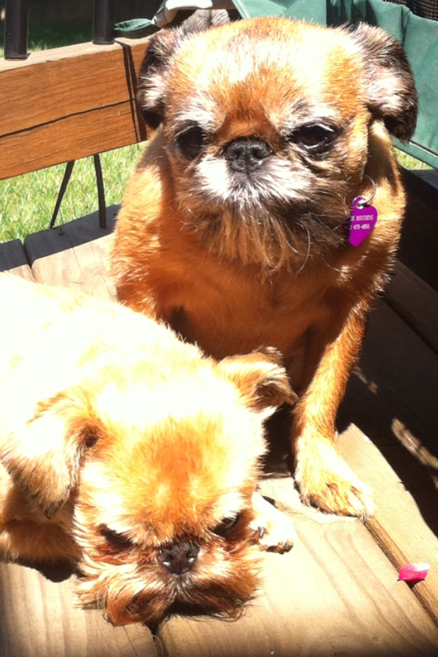 Cosmo and Lizzie love laying in the sun!