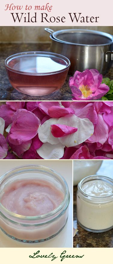 How to make Wild Rose Water ~ an easy to make and natural skin freshener
