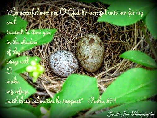 Gentle Joy Photography: Words of Joy!  Beautiful photos!