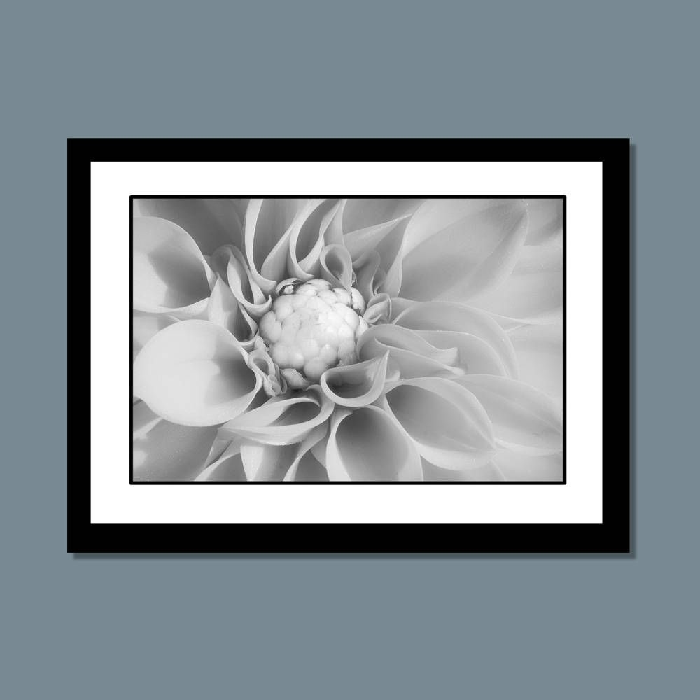 Flower Wall Art Black And White Flower Photography Nature Wall