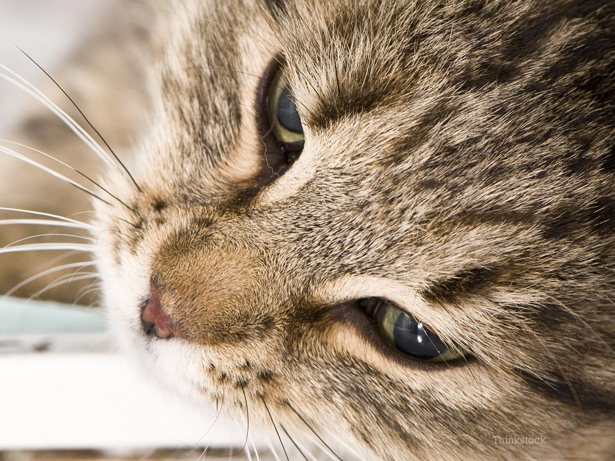 It's often mistakenly thought that for a cat to vomit a