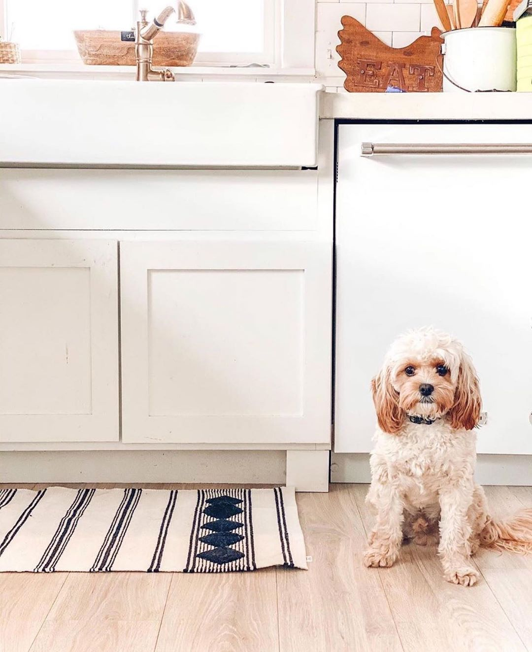 Get Items Like This In The Fabfitfun Spring Box In 2020 Pet Friendly Flooring Cool Rugs Pet Proof