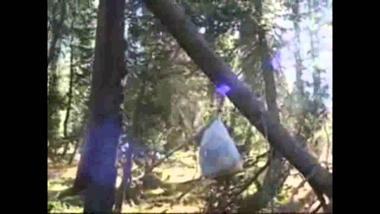 The Bigfoot Screams of Hockett Meadows Bigfoot, Bigfoot
