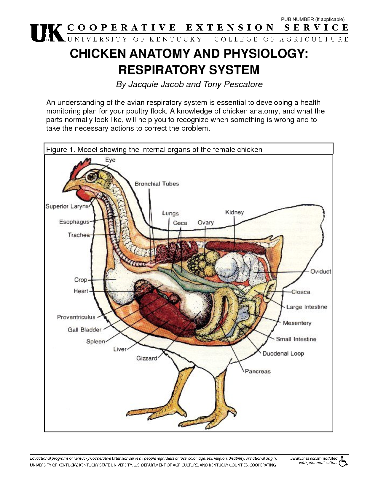 CHICKEN ANATOMY AND PHYSIOLOGY RESPIRATORY SYSTEM   Chickens ...