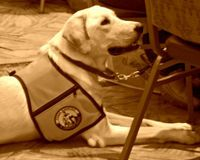 Tell Prince Albert Restaurant to Respect Service Dog Laws
