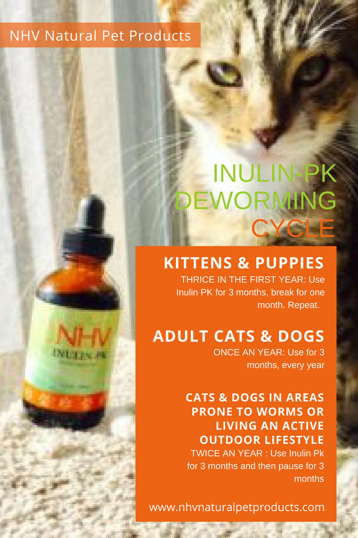 Vet Talk The Importance Of Deworming Your Pets Pets Your Pet Natural Pet
