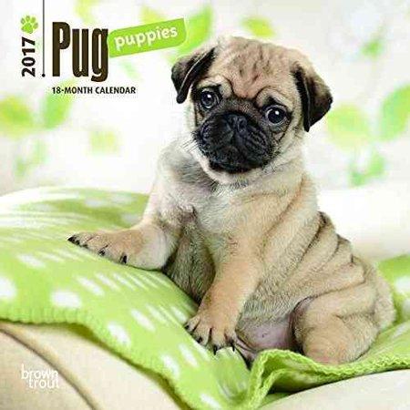 Office Pug Puppies Pugs Puppies