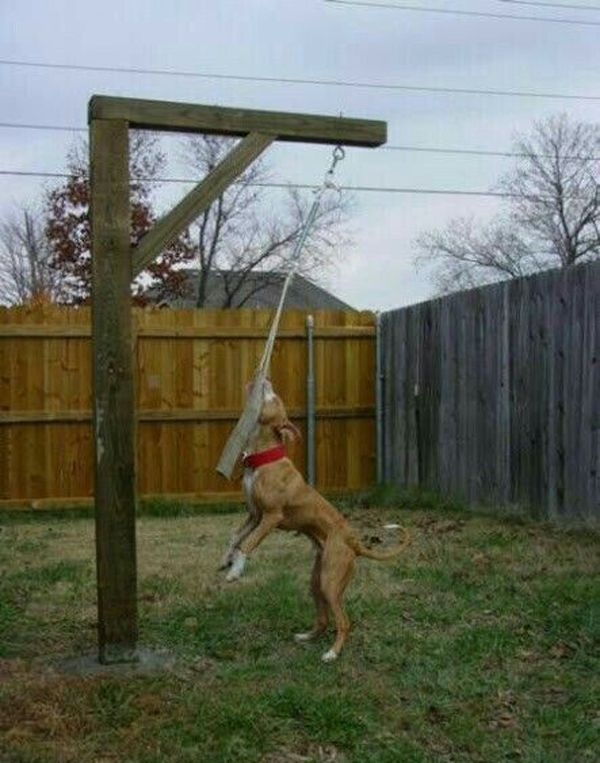 Get Cool DIY Dog from homemydesign.com