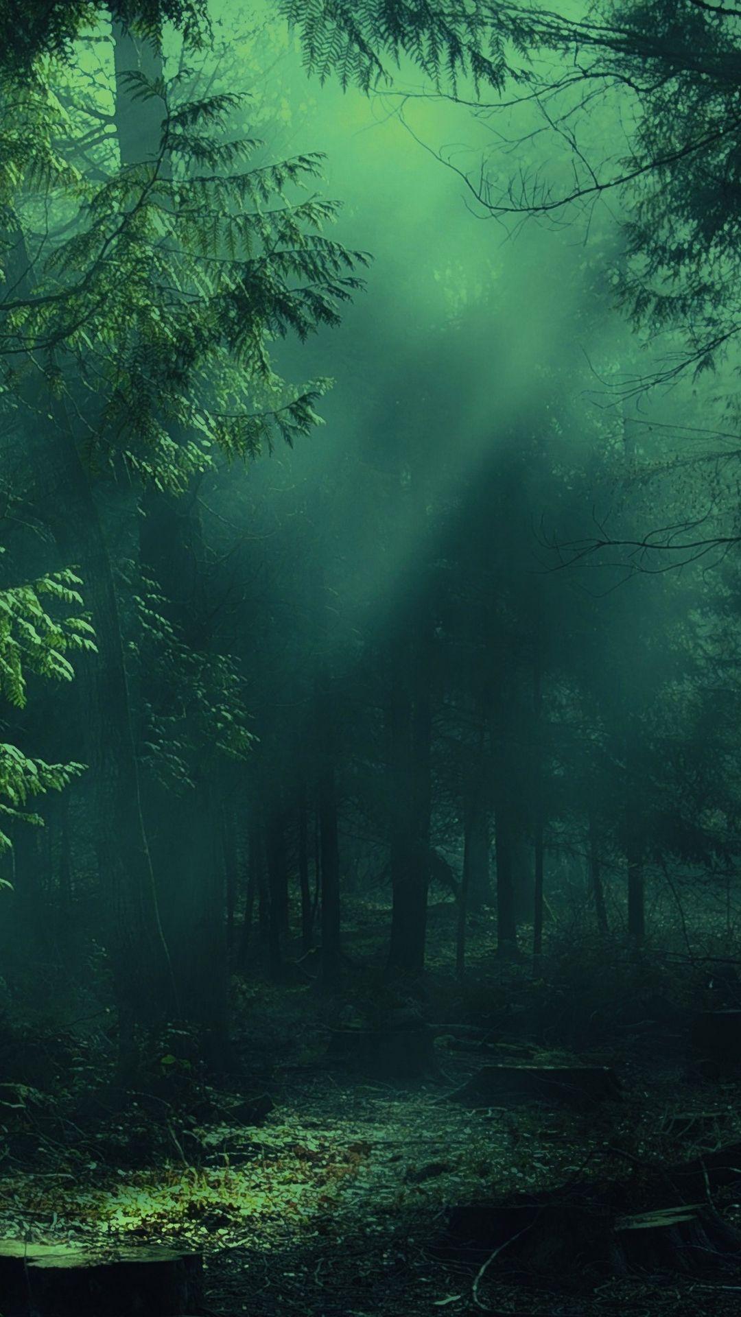 1080x1920 Wallpaper Forest Fog Trees Shadows Light Forest Wallpaper Hd Nature Wallpapers Forest Wallpaper Iphone