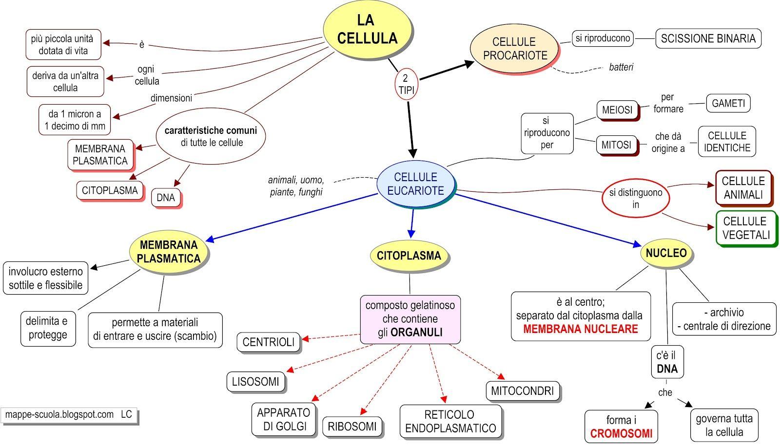 Scienze cellula schema cerca con google filosofia - Sistema catasto tavolare elenco comuni ...
