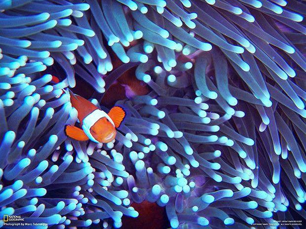 Great Barrier Reef Wallpaper In 2019 Beautiful Sea