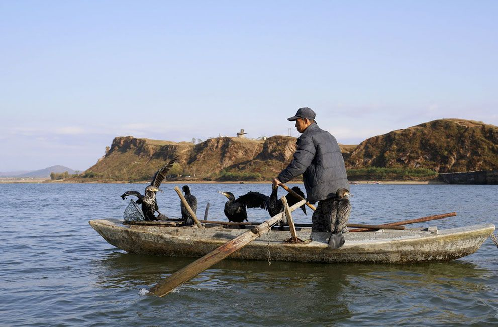A North Korean fisherman pilots a boat with cormorants perched onboard, in the Yalu River near the North Korean town of Sinuiju. October 23, 2012. (Reuters/Aly Song)