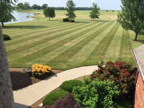 7 cheap landscaping ideas that ll rake in cash later weed killers