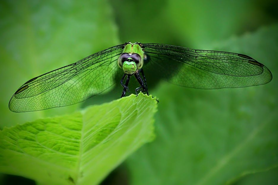 . #green #nature .